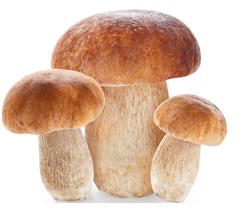 Boletus-edulis_king-bolete-Mushrooms