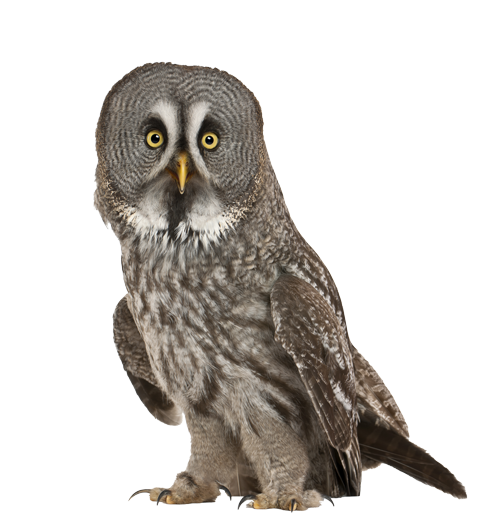 Great-Gray-Owl_masked
