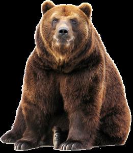 Grizzlie-Bear