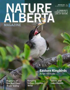Nature Alberta Magazine, Winter 2021 Cover