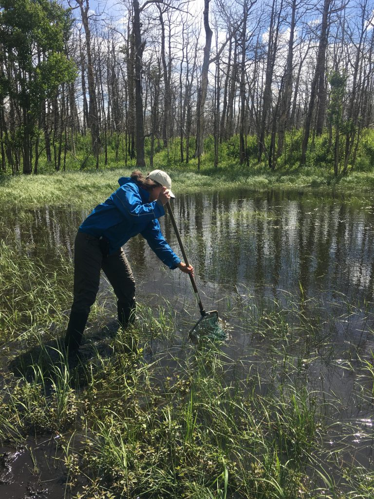 Julie Lee-Yaw skimming for salamanders