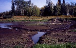 Drought Pond with beaver channels