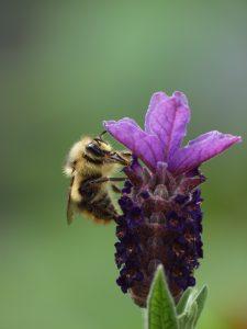Bee by Doris May