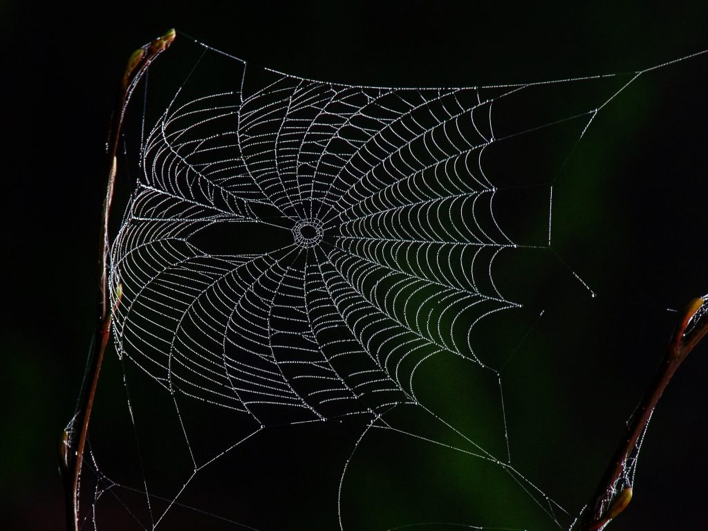 web illuminated by dew drops in the morning sun