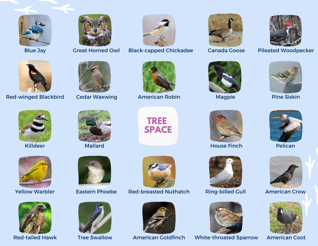 Bird Bingo Activity Sheet