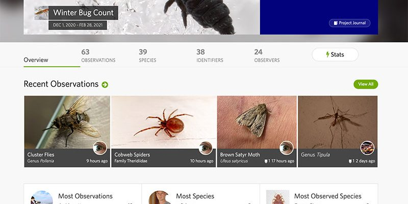 Annual Bug Count Website