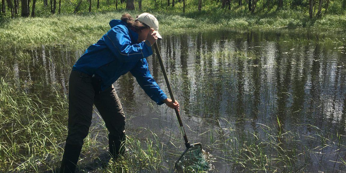 Julie Lee-Yaw skimming for salamanders